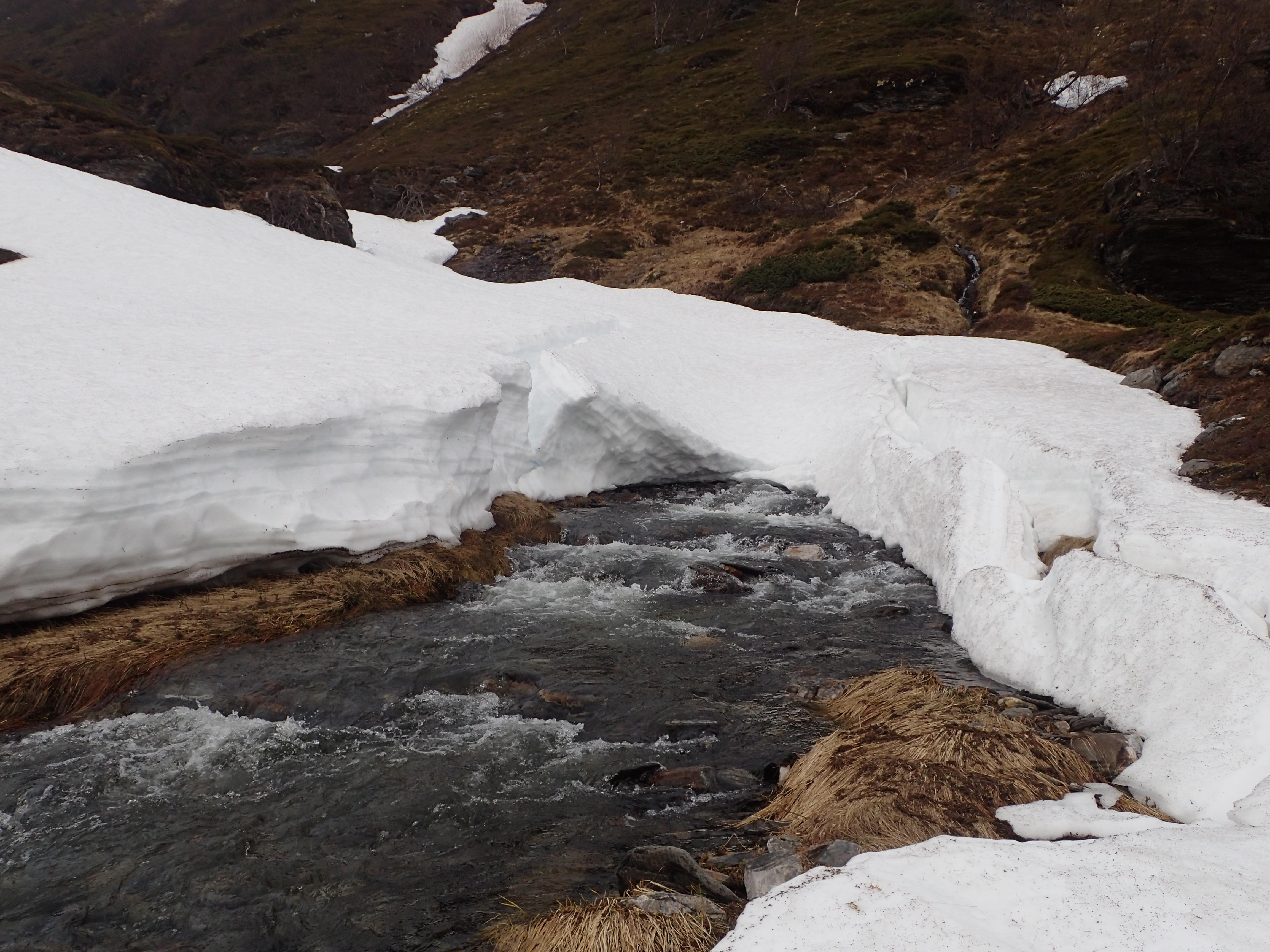 das Schmelzwasser kommt in großen Mengen unter dem Schnee hervor