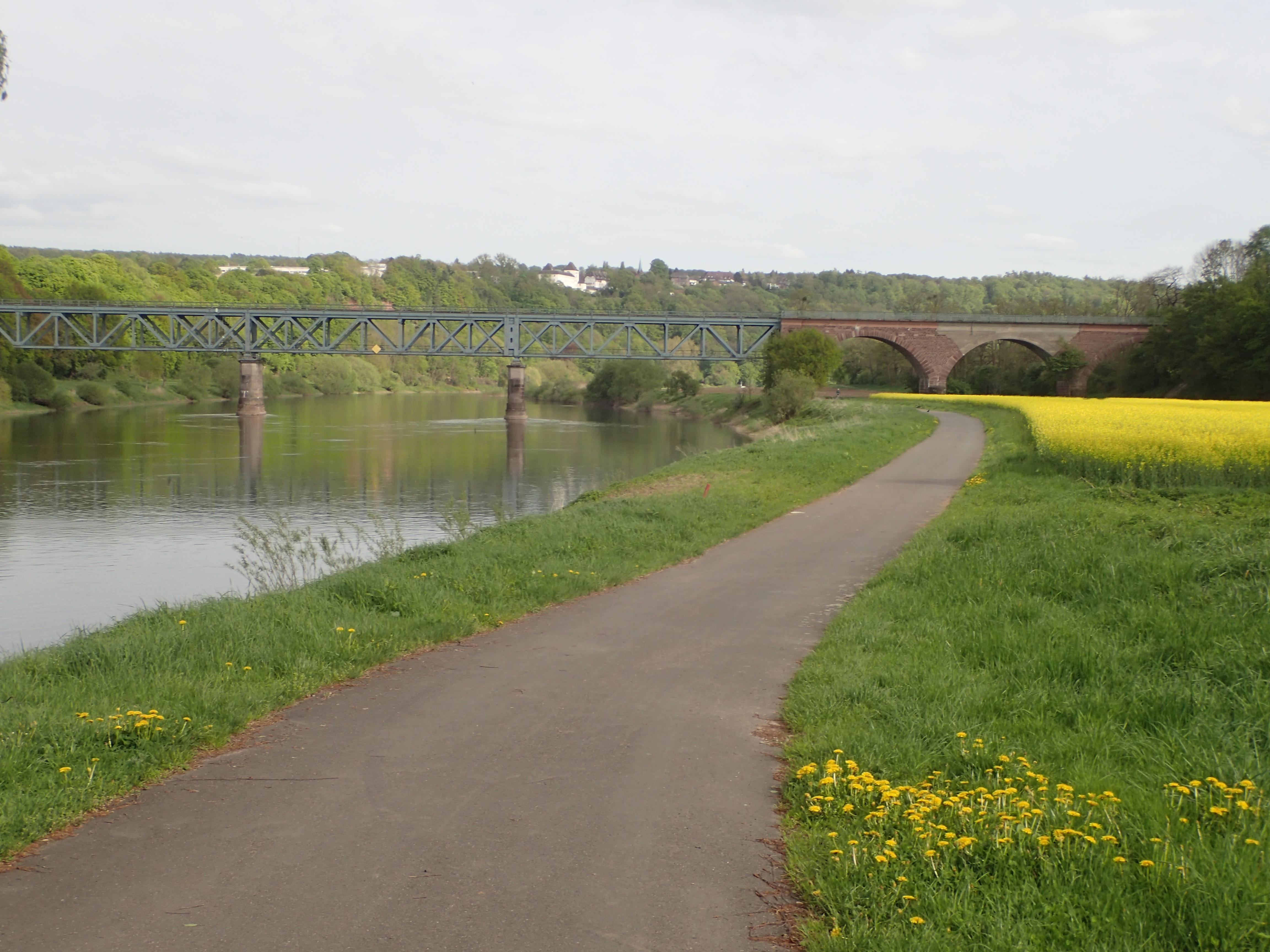 blühende Rapsfelder und der Weserradweg direkt am Ufer