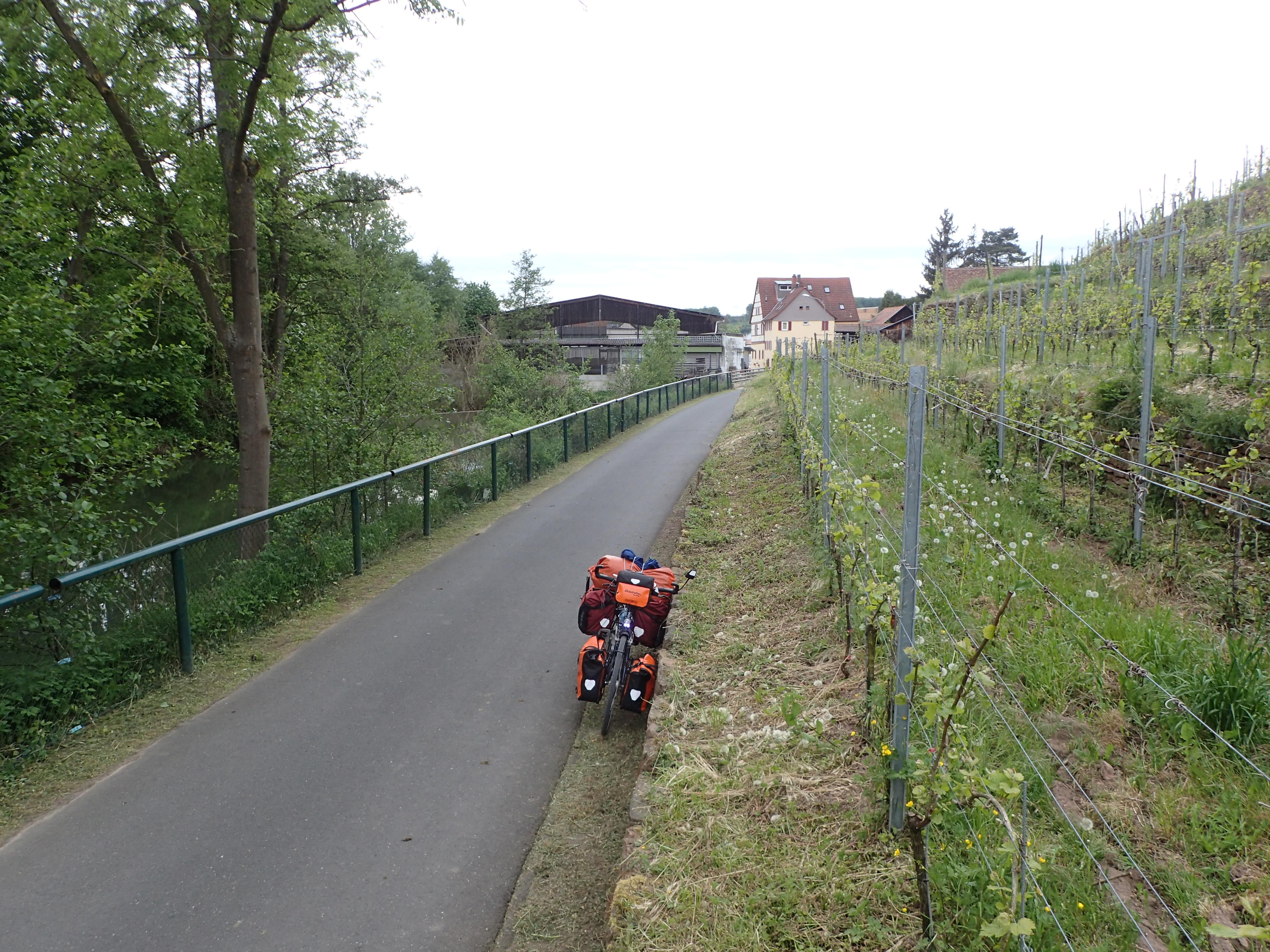 Radweg im Erftal führt an den Weinbergen entlang