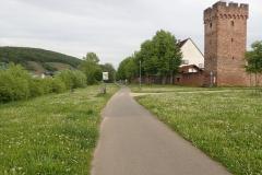 Der Maintalradweg dicht am Ufer des Flusses