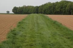 wieder mal ein Feldweg mit Grasoberfläche