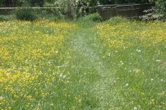 diesen Fußweg über die Blumenwiese hat Naviki als Abkürzung vorgeschlagen